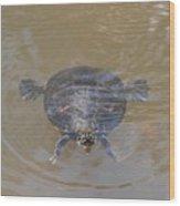 The Swimming Turtle Wood Print