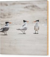 The Talking Terns Wood Print