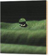 The Tao Of Raindrop Wood Print