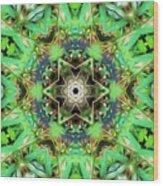 The Terrapin Star Wood Print