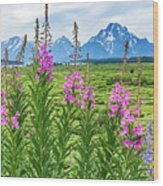 The Tetons Are Grand Wood Print
