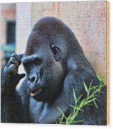 The Thinking Gorilla Wood Print