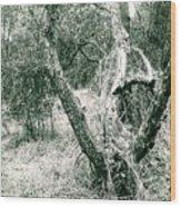The Thinking Tree Wood Print