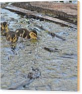The Three Amigos Ducklings Wood Print