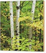 The Three Birch Wood Print