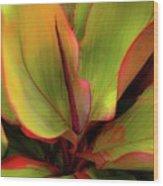 The Ti Leaf Plant In Hawaii Wood Print