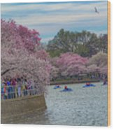 The Tidal Basin During The Washington D.c. Cherry Blossom Festival Wood Print