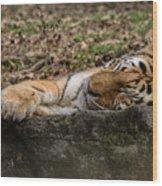 The Tiger's Rock  Wood Print