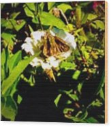 The Tiniest Skipper Butterfly In The Garden Wood Print