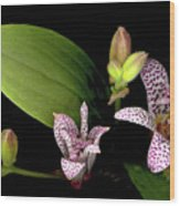 The Toad Lily Wood Print