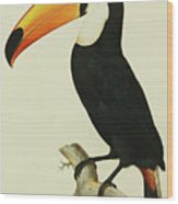The Toco Toco Toucan  Ramphastos Toco Wood Print