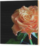 The Touch Of A Rose Wood Print by Tracy Hall