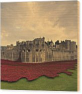 The Tower Poppies  Wood Print