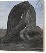 The Tree Creature Wood Print