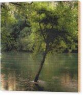 The Tree Island Wood Print