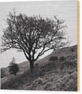 The Tree On The Fell Wood Print