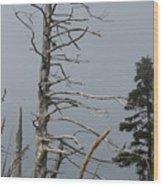 The Trees Of Grand-manan Wood Print