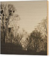 The Trees With Mistletoe. Wood Print