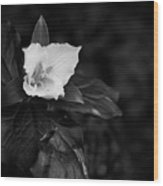 The Trillium Season Wood Print