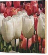 The Tulip Bloom Wood Print
