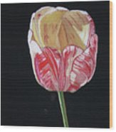 The Tulip Wood Print