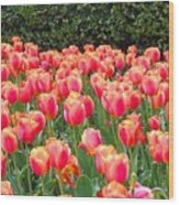 The Tulips Are Coming Wood Print