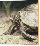 The Turtle Wood Print
