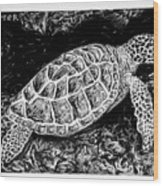 The Turtle Searches Wood Print