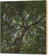 The Underside Wood Print