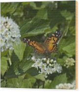 The Unnamed Butterfly Wood Print