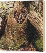 The Valentine Tree 1 Wood Print