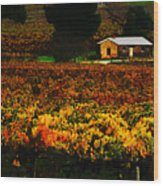 The Vines During Autumn Wood Print
