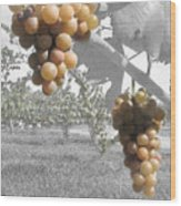The Vineyard 2  Wood Print