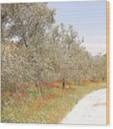 The Walk Of Jenny Brodie Wood Print