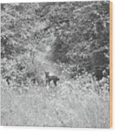 The Wanderer Wood Print