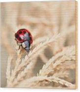 The Wandering Ladybug Wood Print