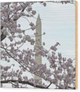 The Washington Monument At The Cherry Blossom Festival Wood Print