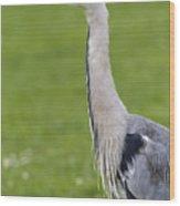 The Watchful Heron Wood Print