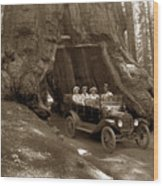 The Wawona Tree Mariposa Grove, Yosemite  Circa 1916 Wood Print