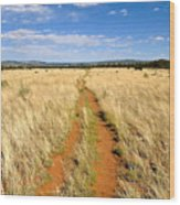 The Westward Trail Wood Print