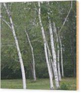 The White Birch Wood Print