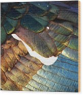 The White Feather - Iridescent Duck Wood Print