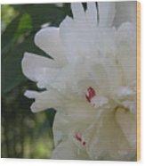 The White Peony IIi Wood Print