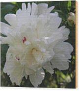 The White Peony Iv Wood Print