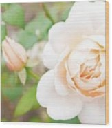 The White Washed Rose Wood Print