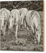 The Wild Horses Of Shannon County Mo 7r2_dsc1111_16-09-23 Wood Print