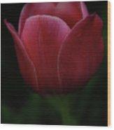The Wild Tulip Wood Print