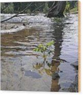 The Wilderness Wood Print