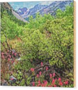 The Wildflowers Of Lundy Canyon Wood Print