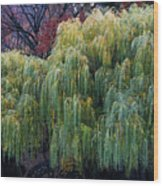 The Willows Of Central Park Wood Print
